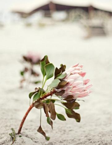 ideas fiesta playa flores
